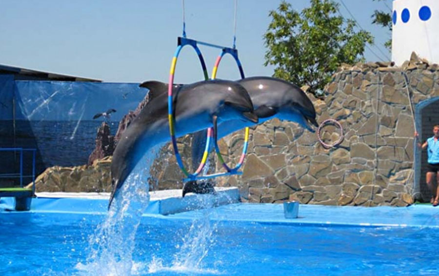 Дельфинарий в Ейске