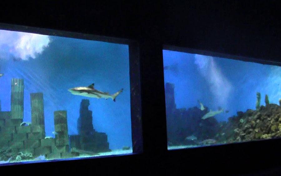 Океанариум в Ейске